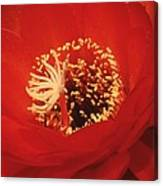 Red Torch Canvas Print