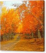 Red Tree Rd Canvas Print
