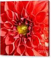 Red Tubular Flower Canvas Print