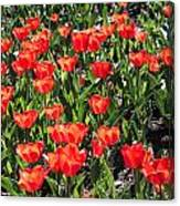 Red Tulip Bed Canvas Print
