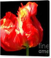 Red Tulip Blurred Canvas Print