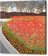 Red Tulip Garden Canvas Print
