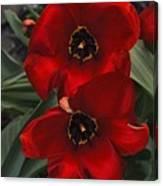 Red Tulip Pair Canvas Print