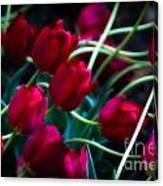 Red Tulip River Canvas Print