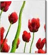 Red Tulips From The Bottom Up Triptych Canvas Print