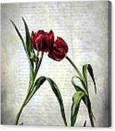 Red Tulips On A Letter Canvas Print