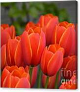 Red Tulips Outlined In Yellow Canvas Print