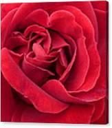 Red Velvety Rose Canvas Print