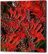 Red Devils Tongue Vine Vertical Canvas Print