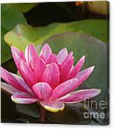Red Water Lily 4 Canvas Print
