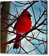 Red White And Blue Cardinal Canvas Print