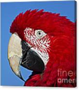 Red White And Blue... Canvas Print
