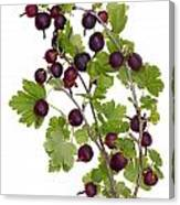 Red Wild Forest Berries Canvas Print