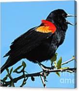 Red Wing Blackbird 2 Canvas Print