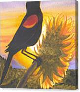 Red-wing Blackbird Canvas Print