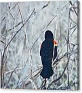 Red Wing Perched Canvas Print