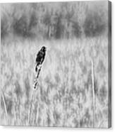 Red-wing Singing In The Marsh Canvas Print