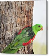 Red-winged Parrot Canvas Print