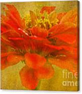 Red Zinnia Essence Canvas Print