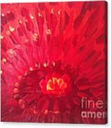Red Zinnia Canvas Print