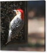 Redbellied Woodpecker Canvas Print