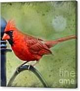 Redbird Alert Canvas Print