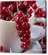Redcurrant Close Up Canvas Print