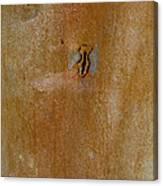 Redgum Tree Canvas Print