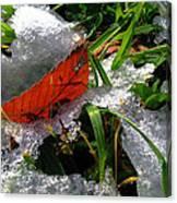 Redleafgrasscomp 2009 Canvas Print