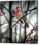 Reds Of Winter Canvas Print