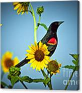 Redwing In Sunflowers Canvas Print