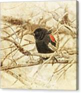 Redwing In The Wind Canvas Print