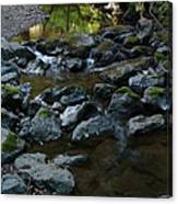 Redwood Creek Canvas Print