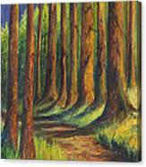 Jedediah Smith Redwoods State Park Canvas Print