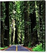 Redwood Highway Canvas Print