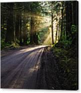 Redwood Magic Canvas Print