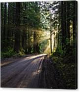Redwood National Park Morning Canvas Print