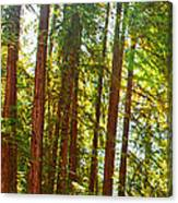 Redwood Wall Mural Panel 1 Canvas Print