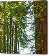 Redwood Wall Mural Panel 2 Canvas Print