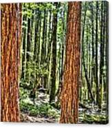Redwoods 2 Big Basin Canvas Print