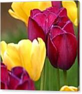 Redyellowtulips6728 Canvas Print