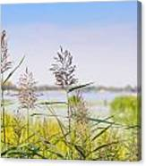 Reed Flowers Canvas Print