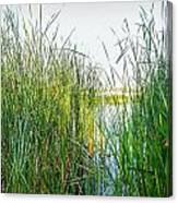 Reeds And River Canvas Print