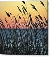 Reeds At Sunset Island Beach State Park Nj Canvas Print