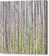 Reeds Background Canvas Print