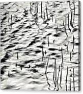 Reeds In Ripples Canvas Print