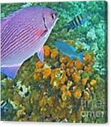 Reef Life Canvas Print