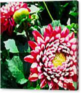 Ref Dahlias Canvas Print
