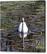 Reflected Beauty Canvas Print