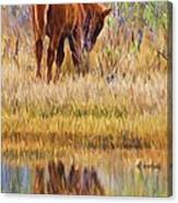 Reflecting Foal Canvas Print